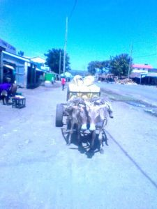 Donkeys at work in Kenya
