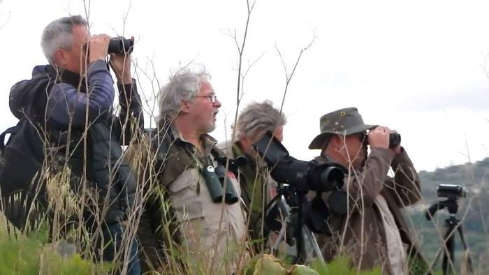 Birders observing