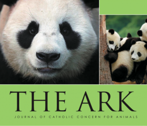 Ark issue 224