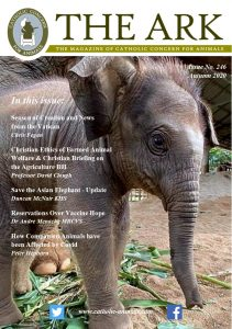 Front Page - Ark 246